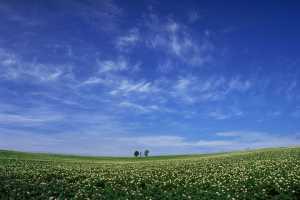 草原のサンプル写真